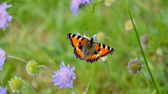 10 Tipps für einen naturnahen Garten