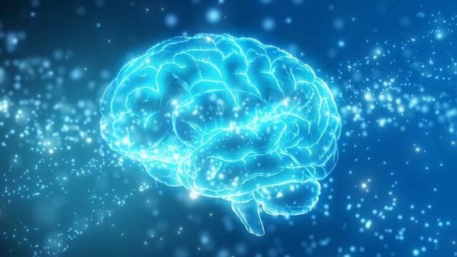 «Spiritualität ist tief in unserem Nervensystem verankert»