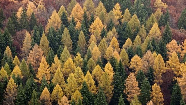 Auch Bäume machen Feinstaub