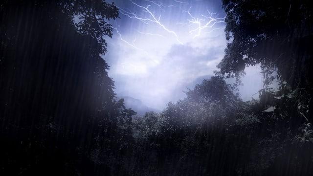 Wie der Blitz den Regenwald bedroht