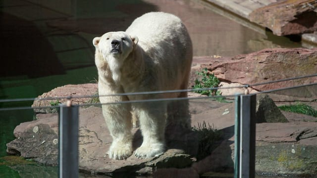 Wozu braucht es heute noch Zoos?